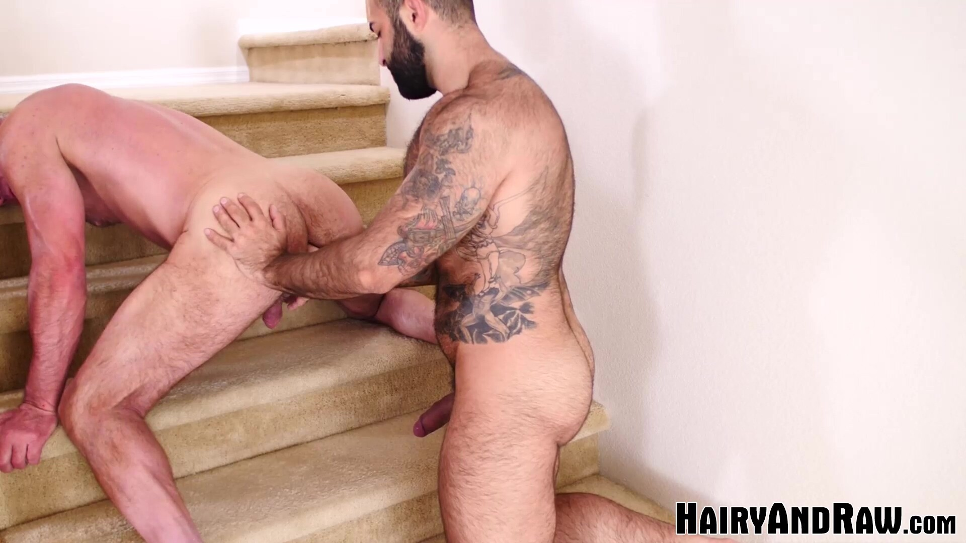 HAIRYANDRAW Hairy Atlas Grant Breeds Mature Dale Savage